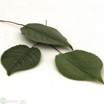 Rosenlaub x1 6/13 cm