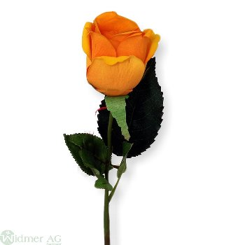 Rose x1, D6L60 cm