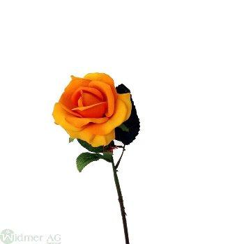 Rose x1 D10/L60 cm