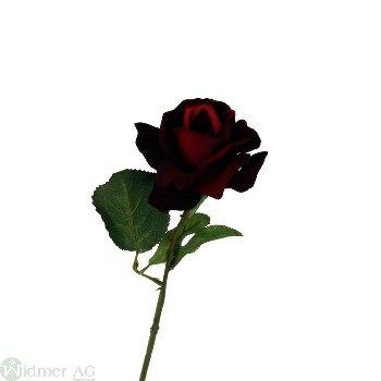 Rose x1 D10/L60 cm färben ab, wenn feucht!