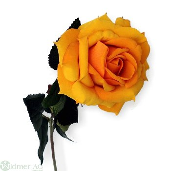 Rose x 2 D13/L80 cm färben ab, wenn feucht!
