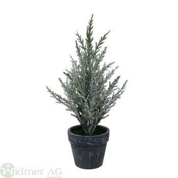 Cypresse im Topf gefr., H28 cm