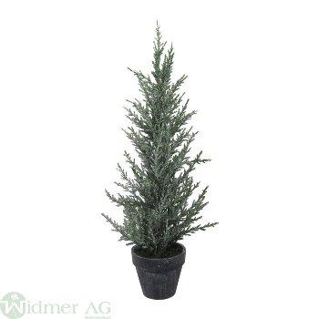 Cypresse im Topf gefr., H42 cm