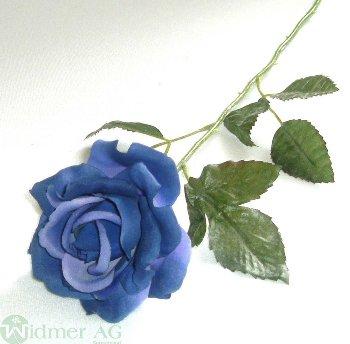 Rose x1 D9/60 cm