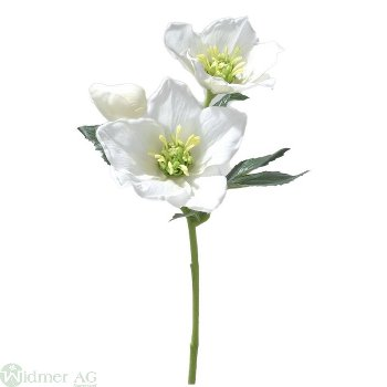 Christrose mit 2 Blüten, L32cm