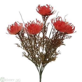 Protea mit 5 Blüten, L40 cm