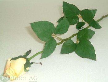Rose x1 D4,5/L70 cm