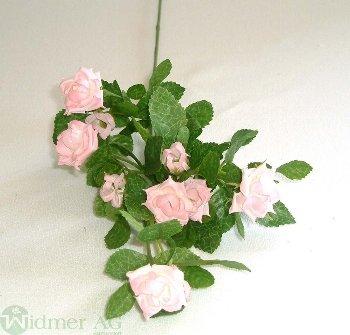 Rosenast 60 cm