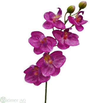 Mini-Orchidee x6, L30 cm