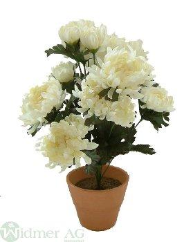 Chrysant.-Busch x 18 48 cm