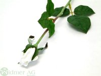 Rose geschlossen D3/L55 cm
