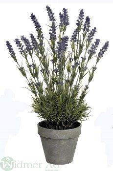 Lavendel x18 48 cm, i.Topf