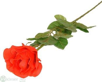 Rose x1, D9L65 cm