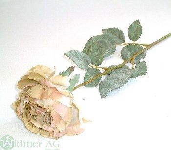 Rose x1 D11/L65 cm