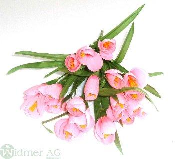 Krokusbusch x5/20 Blüten