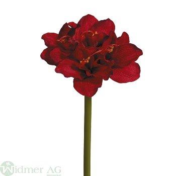 Amaryllis x4, 60 cm