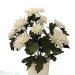 Chrysant.-Busch x 14 40cm