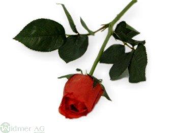 Rose geschlossen D4/L65 cm
