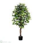 Ficus Benjamini 150 cm x1764