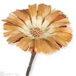 Protea Rep. ros. 8-9cm, 75/Krt