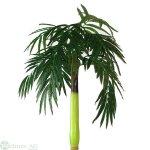 Cocospalme x1 H220/D180cm