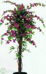 Bougainvillea Liana 210cm