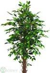 Ficusbaum 210 cm