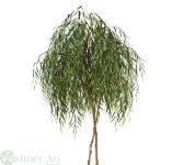 Weidenbaum 200 cm