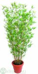 Bambusbaum 90 cm
