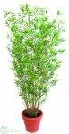Bambusbaum 270 cm