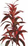 Dracenapflanze x5 100 cm