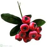 Früchte-Pick 15 cm mit Laub