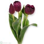 Tulpe x3, 36 cm