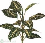 Zebrapflanze 50 cm
