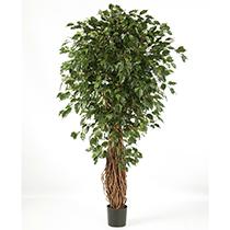 Grosspflanzen | Bäume